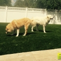 pet-dog-residential-synthetic-turf-3.jpg