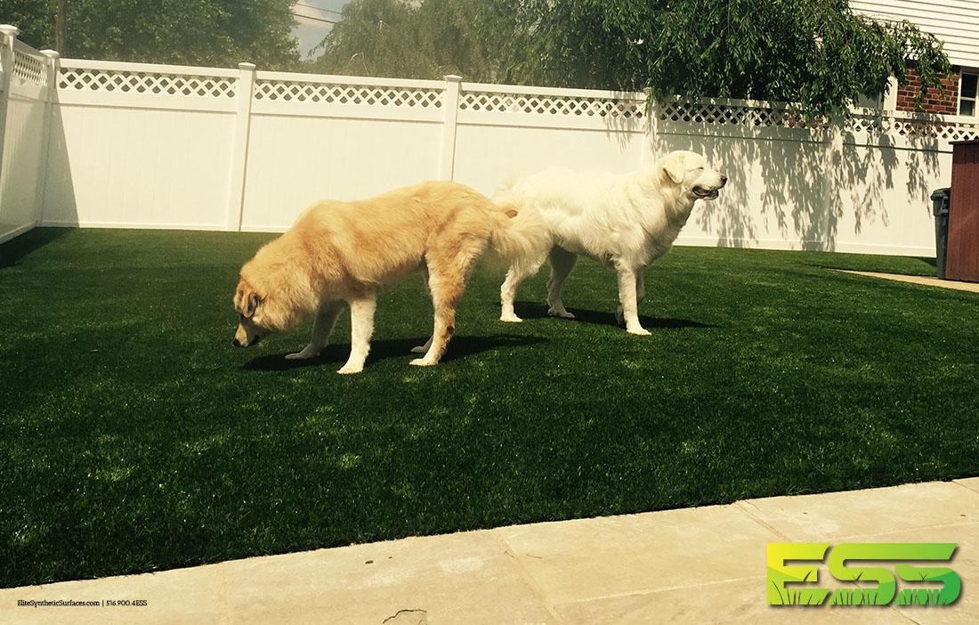 pet-dog-residential-synthetic-turf-3.jpg